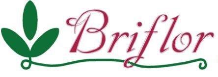 BRIFLOR