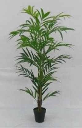 Picture of 125CM BAMBOO PALM IN VASO