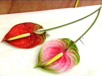Picture of ANTHURIUM STELO