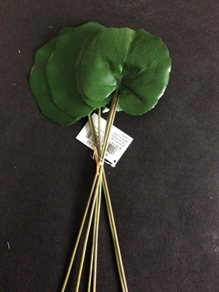 Picture of GALAX LEAF BDL X6 CM30 GREEN