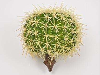 Picture of Cactus 20 cm