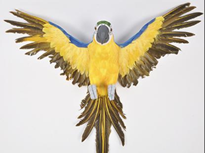 Immagine di Pappagallo in volo 62x72x62 cm