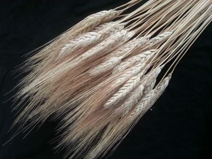 Picture of GRANO baffo biondo x 200 gr. bianco