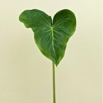 Picture of FOGLIA CALLA LILY (LEAF) CM 60 GREEN