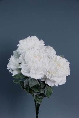 Picture of BUSH PEONIA INNEVATA X 5 WHITE