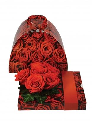 Immagine di OASIS® floxi uni color roses 22,5x17,5x3,2 cm.