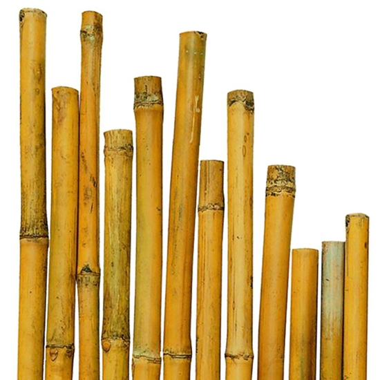 Picture of BAMBOO 3,95 mt  D. 4,5-6 CM NATURALE