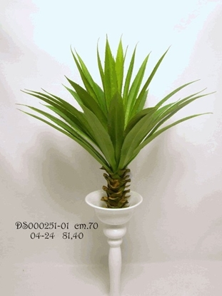 Picture of AGAVE PLANT