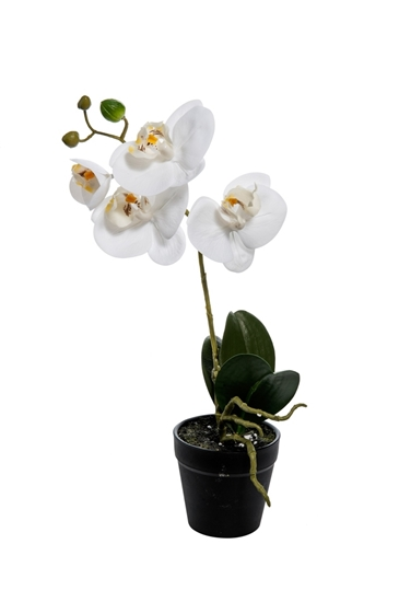 Picture of PIANTA PHALENOPSIS NATURAL TOUCH 38CM.