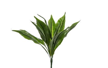 Picture of ASPLENIUM PLANT x 11 CM.45