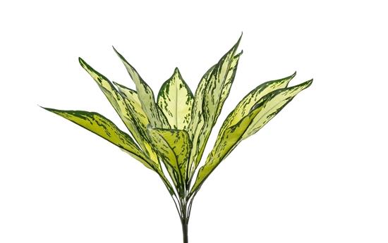 Picture of DRACENA PLANT x 11 CM.45