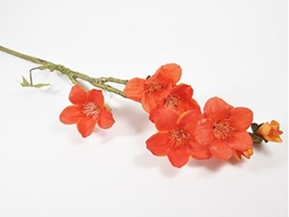 Immagine di Bombax con fiore ramo 139,5 cm