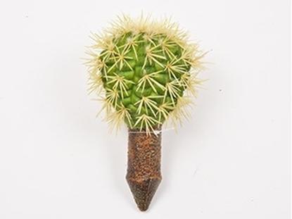 Picture of Cactus 17,5 cm
