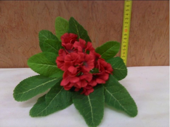 Picture of BEGONIA BUNCH RED