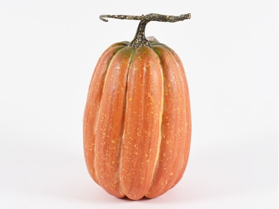 Picture of Zucca 13x22 cm